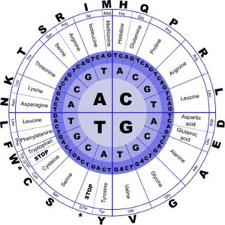 código_genético-monsanto