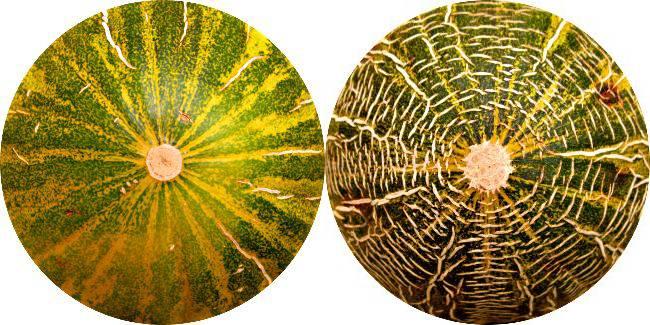 melon-y-melona