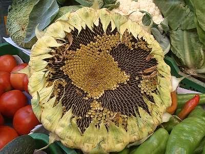 Las frutas y verduras de temporada nos benefician.